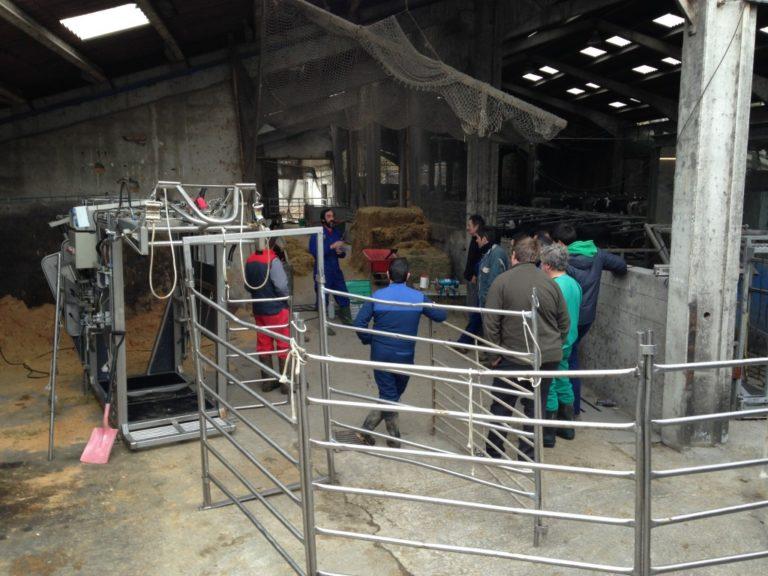 Curso de cuidado de pezuñas en la Escuela Agraria de Fraisoro